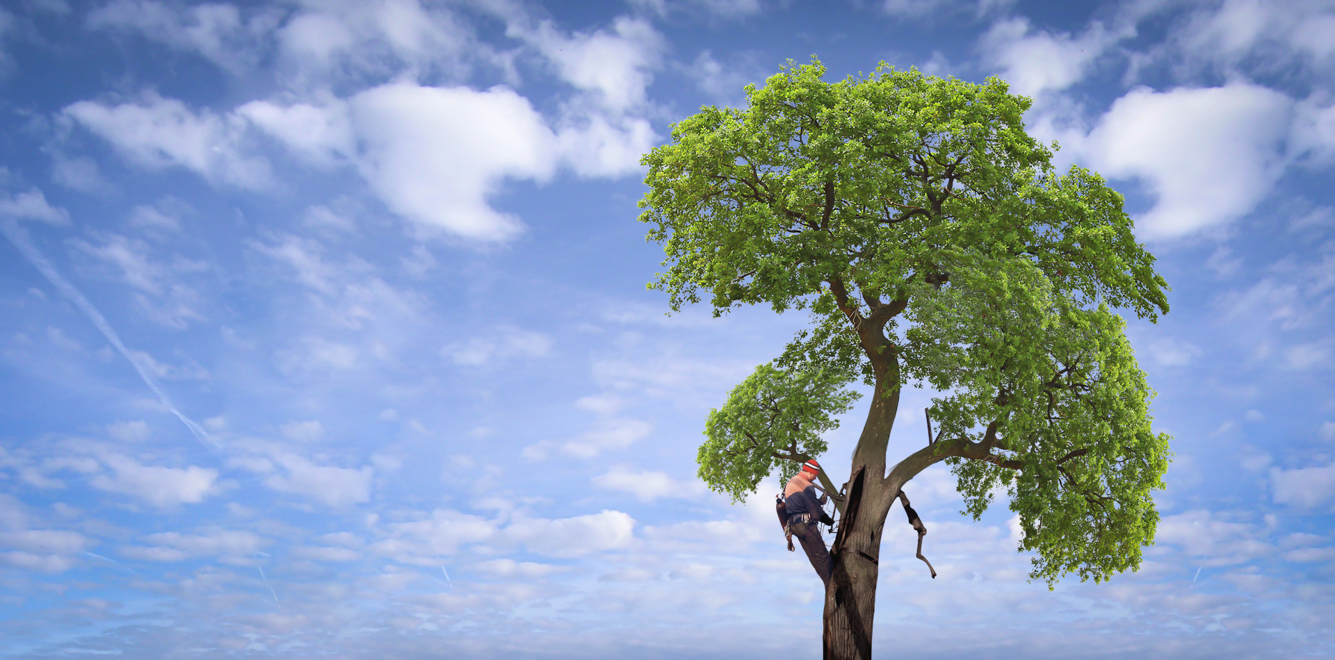 Arboristika - péče o zeleň, dřeviny a krajinu